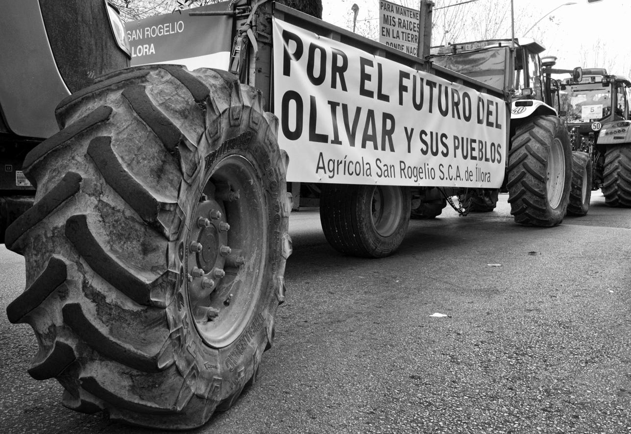 Manifestación del olivar tractores 12